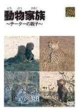 動物家族~アフリカ編~チーター [DVD]