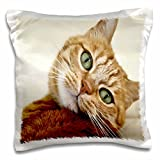 "3dRose pc_203883_1 Print of Orange Tabby Cat Painting Pillow Case, 16"" x 16"""