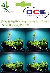 DCS (048) Spring Bonsai aquarium grass 10 Seeds Mosa Black Novel Blooming Plant-21