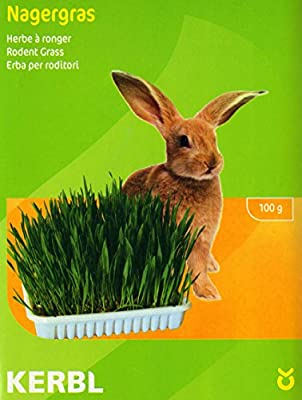 Nibble Grass Seeds for rabbits or small pets/Comes with dish & soil (mineral substitute) MULTI-BUY DISCOUNT/Oats, wheat and barley.