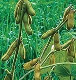 Soybean Envy D105A (Green) 100 Organic Seeds by David's Garden Seeds