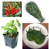 香味野菜 4種8株セット[スイートバジル、青シソ、九条ネギ、鷹の爪]