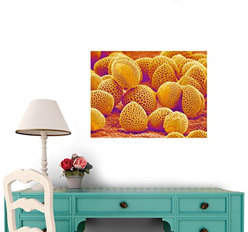 Lily Pollen Wall Decal - 24 Inches W X 18 Inches H - Peel And Stick Removable Graphic