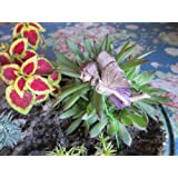 Cecilia Miniature Flying Fairy Garden Pick for Plants Container Gardens Terrariums