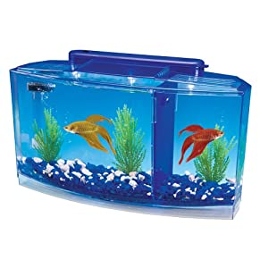 Penn plax deluxe triple betta bow aquarium for Betta fish tanks amazon