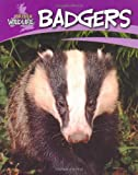 Sally Morgan British Wildlife: Badgers