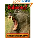 Baboons! Learn About Baboons and Enjoy Colorful Pictures - Look and Learn! (50+ Photos of Baboons)