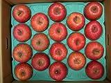 信州のりんご園 永田農場 サンふじ お得用(コキズ) 15kg 特別栽培リンゴ ランキングお取り寄せ