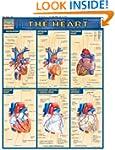Heart (Quickstudy: Academic)