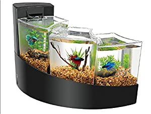 aqueon kit betta falls for aquarium black pet ForBetta Fish Tanks Amazon