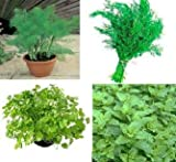 4 packs herb seeds -Fennel, Dill, Coriander, PepperMint