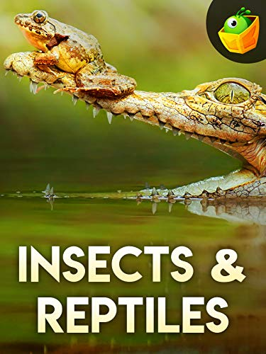Insects & Reptiles on Amazon Prime Video UK