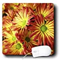3dRose LLC 8 x 8 x 0.25 Inches Mouse Pad, Yellow and Red Mexican Daisies (mp_35229_1)