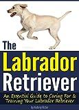 The Labrador Retriever: An Essential Guide to Caring For and Training Your Labrador Retriever ( How to Train a Labrador Retriever | Labrador Training Tips )