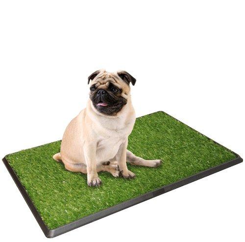 Indoor Potty Grass