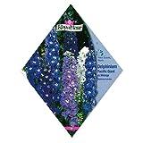 [花タネ][フランス花の種]デルフィニウム パシフィックジャイアント ミックス 1袋