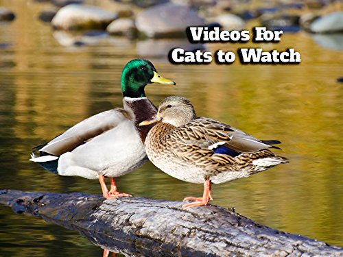 Videos for Cats - Season 1
