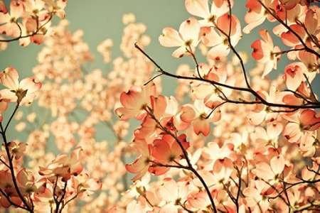 pink-pic-par-st-clair-olivia-joy-imprime-beaux-arts-sur-toile-petit-110-x-73-cms