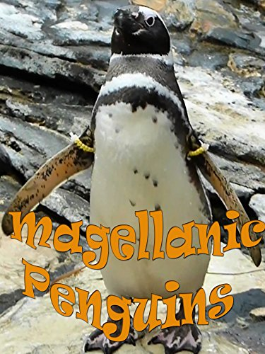 Clip: Magellanic Penguins on Amazon Prime Instant Video UK