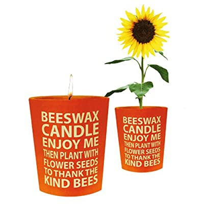 Bee Good Beeswax Candle With Aster Seeds