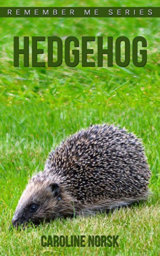 Hedgehog: Amazing Photos & Fun Facts Book About Hedgehog For Kids (Remember Me Series) (Baby Hedgehog Food compare prices)