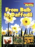 From Bulb to Daffodil (Scholastic News Nonfiction Readers)