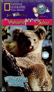 NATIONAL GEOGRAPHIC Video Infantil: Los Verdaderos Animales Salvajes (Really Wild Animals) Maravillas De Australia (Wonders Down Under)