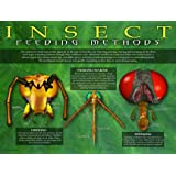 Entomology - Insect Feeding Poster