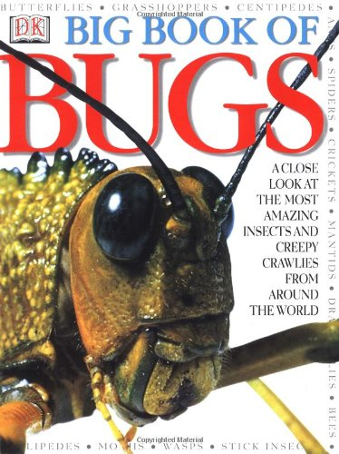 Insect Books For Children