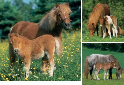 Ravensburger Puzzle-Mare With Foal