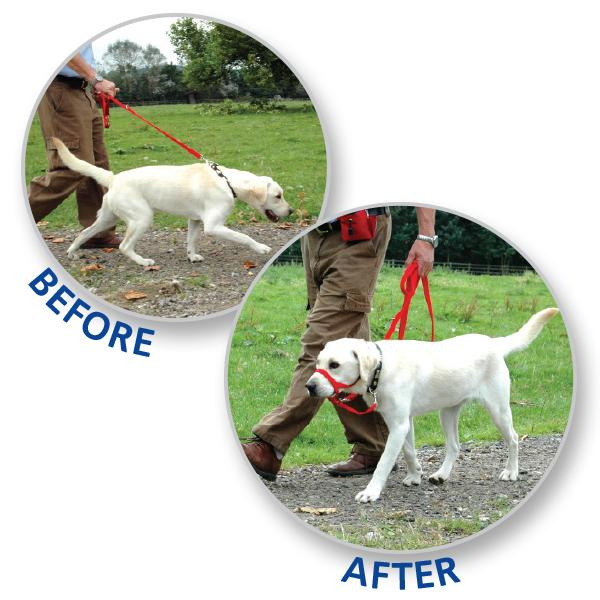 Best Dog Leads And Collars For Training Uk