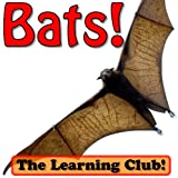 Bats! Learn About Bats And Learn To Read - The Learning Club! (45+ Photos of Bats)