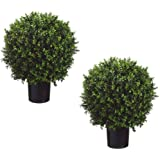 """TWO Pre-potted 24"""" Ball-shaped Boxwood Topiary. In Plastic Pot"""