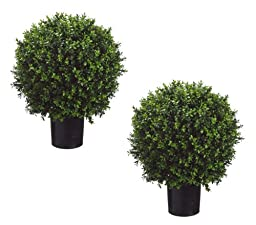Set of 2 - Pre-Potted 24\