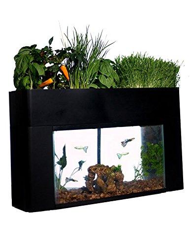 Aquaponics shopswell for Aquaponics aquarium