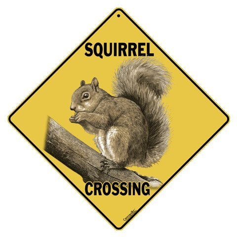 Squirrel Crossing 12