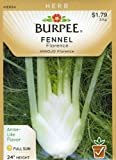Burpee 61573 Herb Fennel, Florence Seed Packet