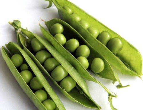 Wrinkled Pea 'Rondo' (Pissum Sativum L.) Vegetable Plant Seeds, Late, Sweet Heirloom 10G (0.35Oz)