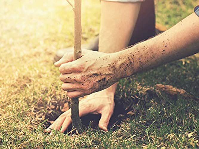 The Science of Gardening Season 1 Episode 10