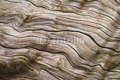 Wallmonkeys Peel and Stick Wall Decals - Driftwood - Driftwood - 36