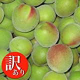 <予約開始>和歌山県産訳あり南高梅(青梅)約5kg 6月中旬頃から出荷予定