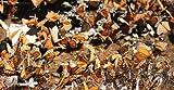 Image de Fantastische Reise der Schmetterlinge (3D Vers.) [Blu-ray 3D] [Import allemand]