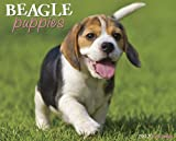 Beagle Puppies 2012 Calendar