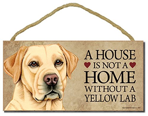 Labrador Retriever (yellow)