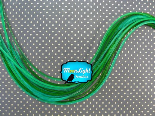 Moonlight Feather Hair Extension Feathers Solid Emerald Green Color 7 10 Inches Long 10 Feathers