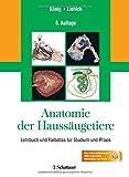 Image de Anatomie der Haussäugetiere