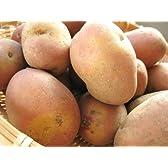 インカのひとみ お得用 5kg (サイズ無選別) 北海道産地直送じゃがいも インカの瞳 (インカのめざめの新品種)ジャガ芋
