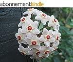 Hoya carnosa: Wax plant (English Edit...