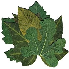 Sisson Imports French Leaves, Green, Set of 40