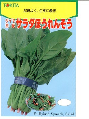 サラダほうれんそう トキタのほうれん草種です
